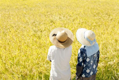 「七本槍」の原料米は、地元篤農家とのタッグで育つ