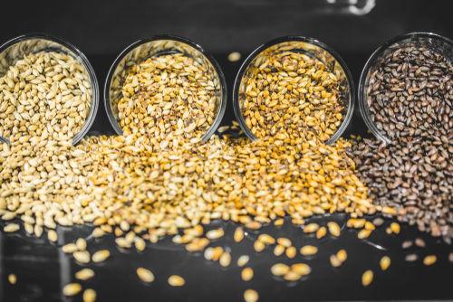 ビールの製造方法(1)製麦工程