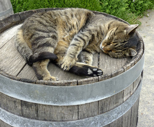 「ウイスキーキャット」は蒸溜所専属の番猫?