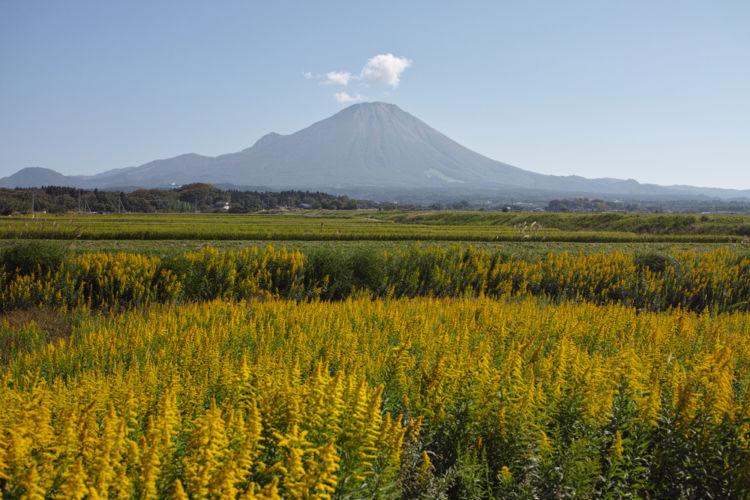 鳥取の日本酒【八郷(やごう)】大山の豊かな自然に抱かれた地元密着の酒