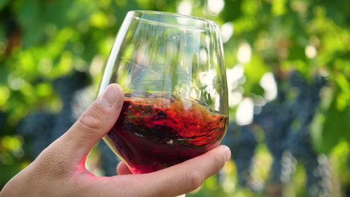 フランスは世界最高峰の赤ワインを多数生み出すワイン大国