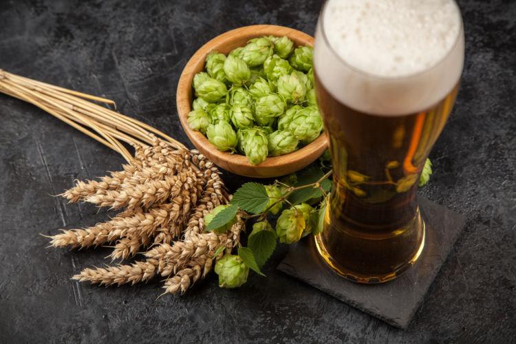 ビールの原料「ホップ」とは? ビールの苦さとおいしさの秘密を探る