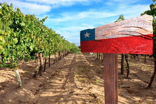 チリの名門ワイナリーのお手頃ワインをチェックしよう!