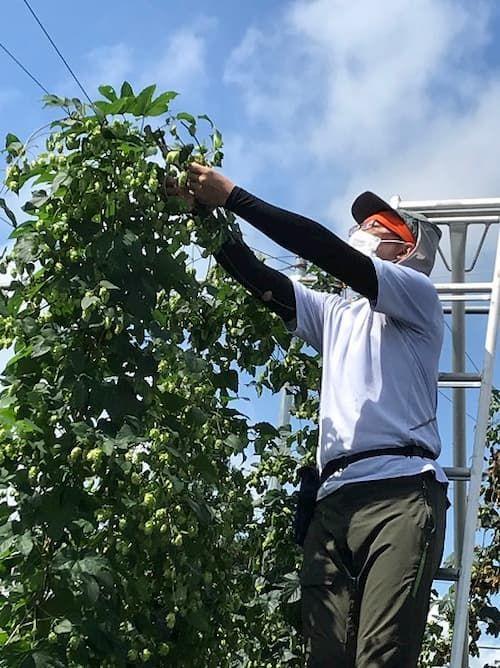 岩手県雫石町の若手農家を中心に結成している「雫石ホップチャレンジ」