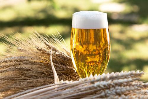ビールの主原料「麦芽」とは?