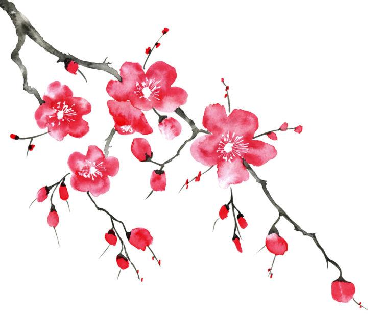熊本の日本酒【花の香(はなのか):花の香酒造】地元産の水と米で全量を仕込むこだわりの地酒