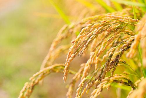 「花の香」は水と米にこだわる地酒