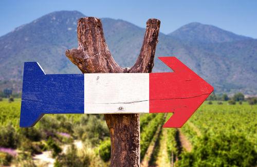 フランスの赤ワインを代表するブドウ品種6種類