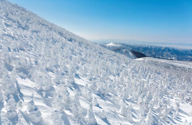 山形の焼酎【雪原(せつげん):古澤酒造】寒河江の老舗蔵が造る極上の焼酎