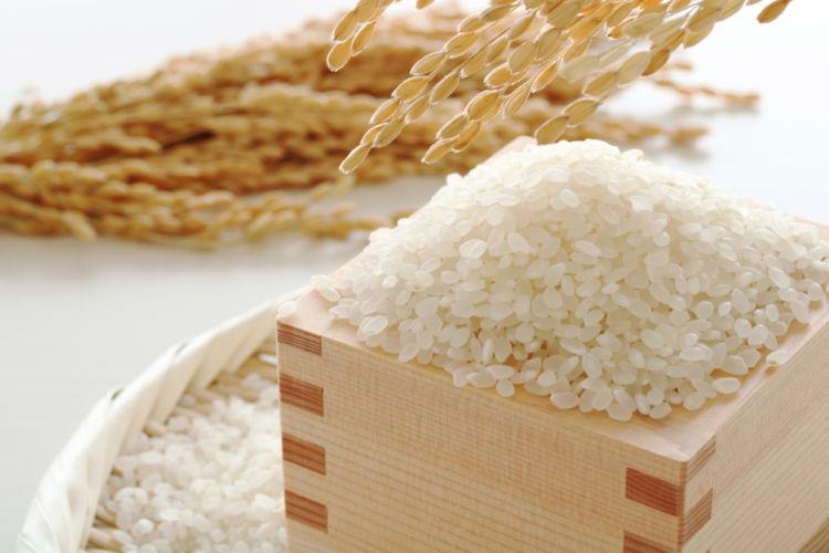 「掛米(かけまい)」ってどんなお米? 日本酒造りに使われるお米を解説