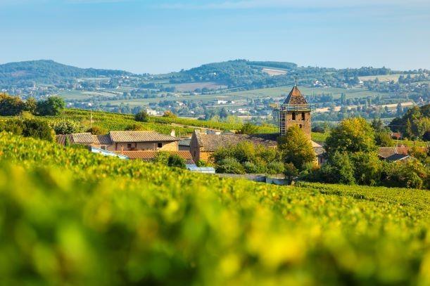 まだ知られていないブルゴーニュワインの魅力を発見