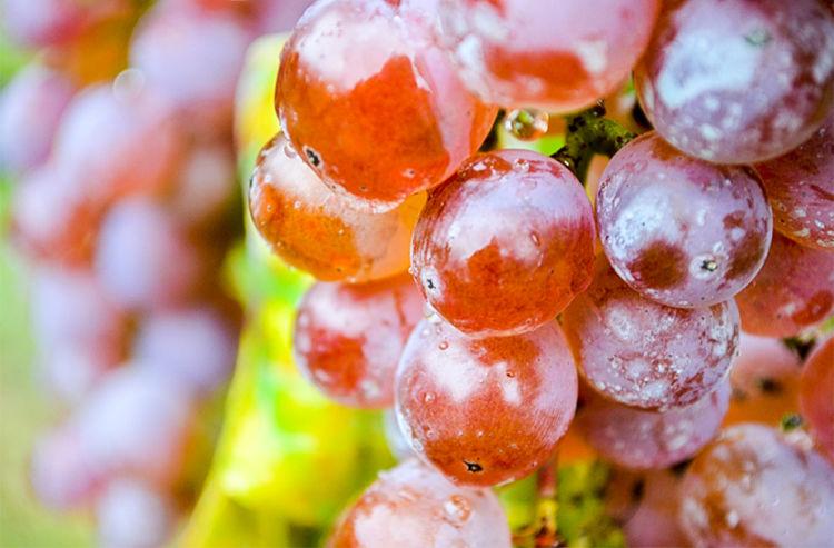 和食との完璧な相性を標榜するスパークリングワイン