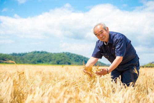 宮城県東松島の大麦畑とアグリードなるせの安部会長