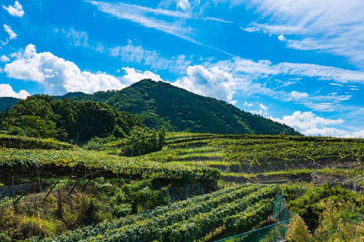 世界に通用するワインを生み出す 「中央葡萄酒(株)/グレイスワイン」