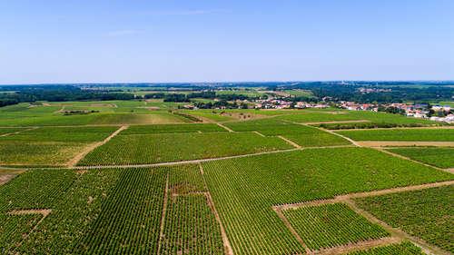 大西洋沿岸に位置する白ワインの名産地ミュスカデ