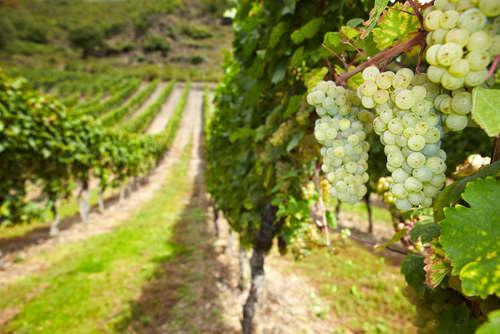 ワイン造りの最北端ならではの味わい