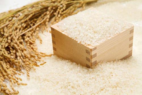 日本酒を造るお米って?食べるお米とは違う「酒造好適米」を知ろう!