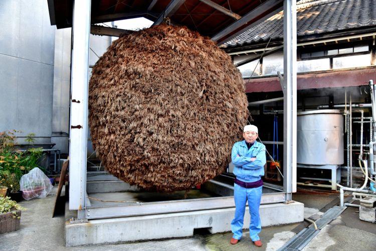 直径3m・重さ3tもあるという日本最大級の杉玉は、まさに蔵のシンボル。