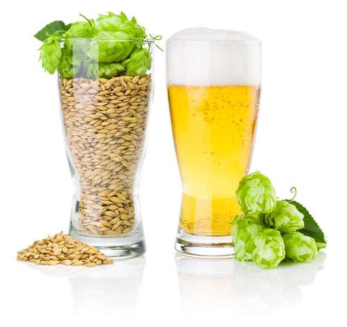 さまざまな「ホップ」とビールの味の関係