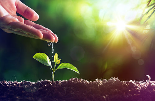 掃除など家事だけでなく、植物の肥料としても活躍