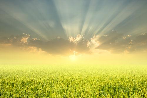 「日高見」という名に込められた地元への想い