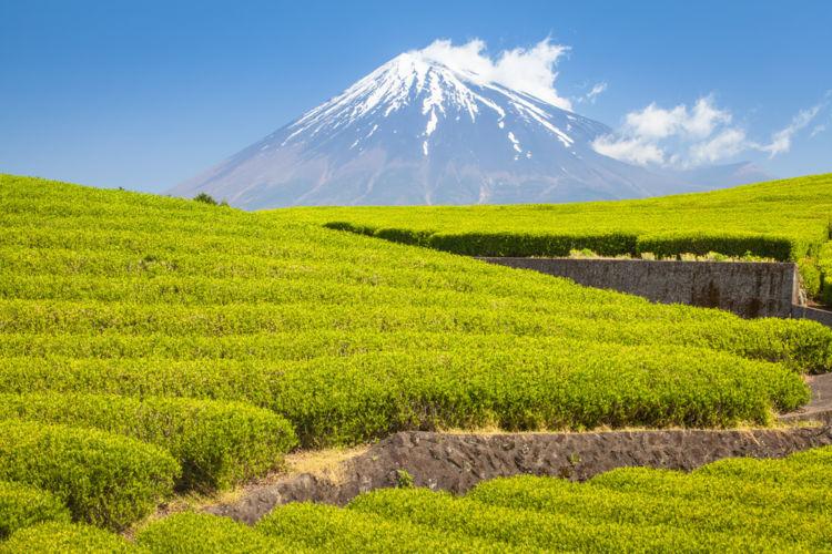 静岡のおすすめ地酒10選【静岡の日本酒】