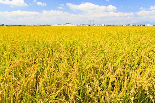 「寫樂」の魅力は、名水とこだわりの米が育んだ味わい