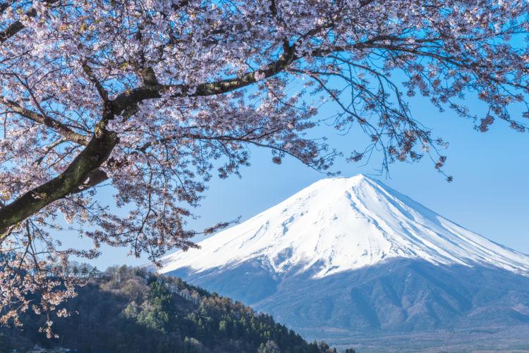 「開運(かいうん)」吟醸王国静岡を代表する良質な地酒【静岡の日本酒】