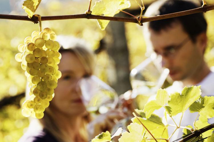 ワイン造り体験のブーム到来! その魅力に迫る