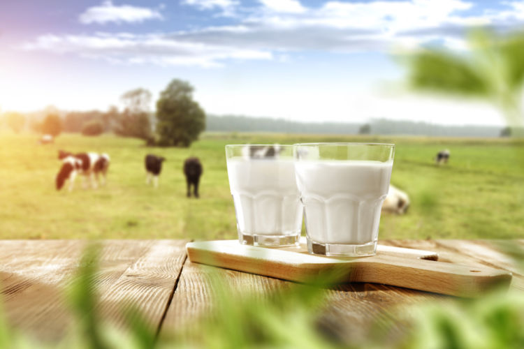 焼酎と牛乳、意外な組み合わせが思わぬおいしさを!《焼酎きき酒師監修》