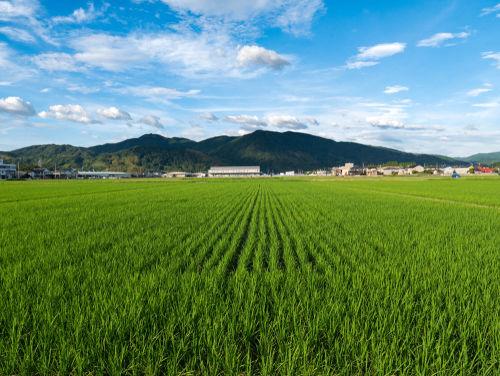 佐賀は古代から米作りが行われてきた、隠れた名醸地