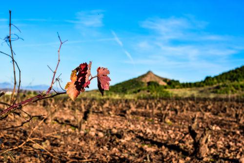 フランスワインが歴史の中で乗り越えてきた3つの困難
