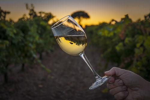 ピノグリージョを使ったワインの特徴